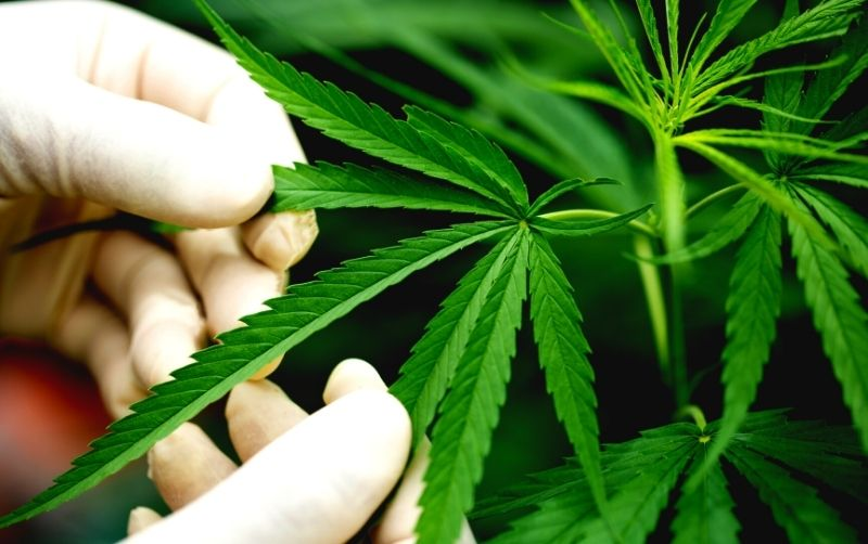 online medical marijuana card